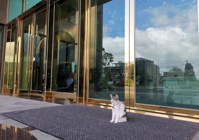 貓棧長的家